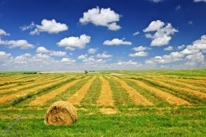 campo-terreno-agricolo1